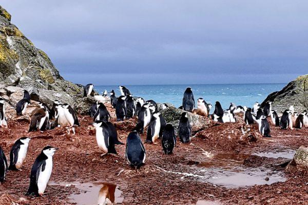 Oceanmaster Antarctica image 4 min