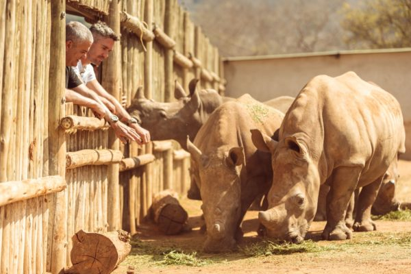 big bang sorai hublot Care For Wild Rhino Sanctuary 2